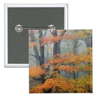 Red Maple tree, Acer rubrum, portrait in foggy 2 Inch Square Button