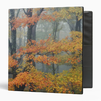 Red Maple tree, Acer rubrum, portrait in foggy Binder