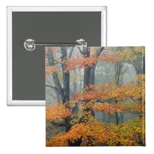Red Maple tree, Acer rubrum, portrait in foggy Button
