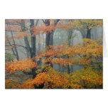 Red Maple tree, Acer rubrum, portrait in foggy Cards