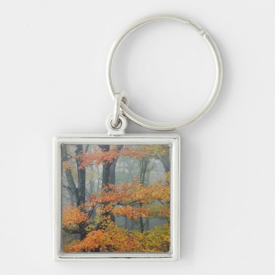 Red Maple tree, Acer rubrum, portrait in foggy Keychain