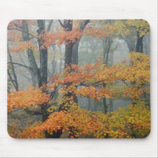 Red Maple tree, Acer rubrum, portrait in foggy Mouse Pad