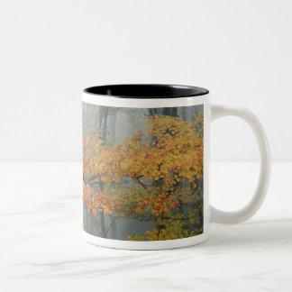 Red Maple tree, Acer rubrum, portrait in foggy Coffee Mug