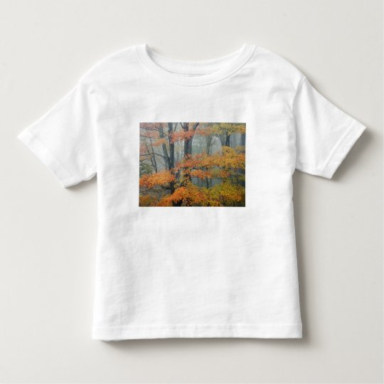 Red Maple tree, Acer rubrum, portrait in foggy Toddler T-shirt
