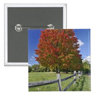 Red Maple tree in autumn colors, near Concord, 2 2 Inch Square Button