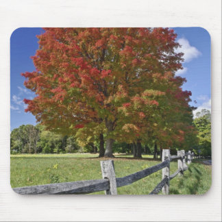 Red Maple tree in autumn colors, near Concord, 2 Mouse Pad