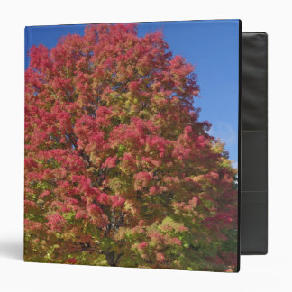Red Maple tree in autumn colors, near Concord, 3 Ring Binder