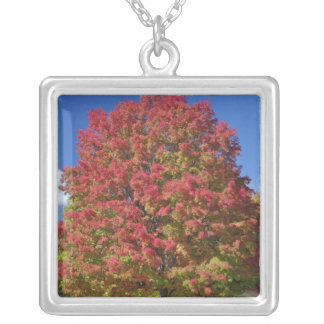 Red Maple tree in autumn colors, near Concord, Silver Plated Necklace