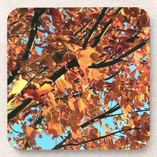 Red Maple tree in Autumn Beverage Coasters