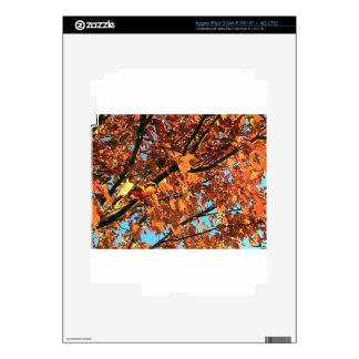 RED MAPLE TREE IN AUTUMN FALL iPad 3 SKIN