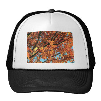 RED MAPLE TREE IN AUTUMN FALL TRUCKER HAT