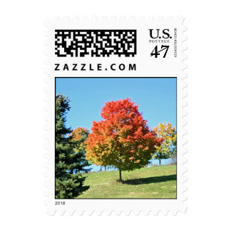 Red Maple Tree stamps