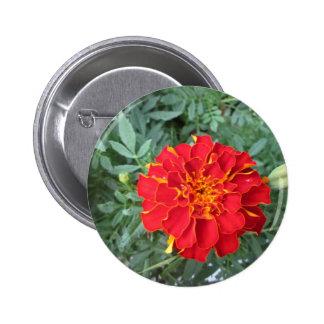 Red Marigold Flower Button