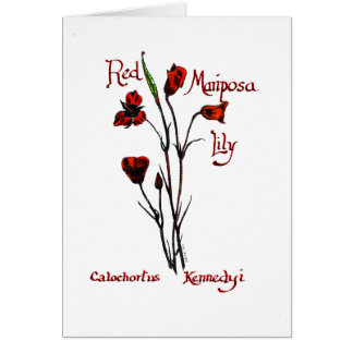 Red Marisposa Lily Card