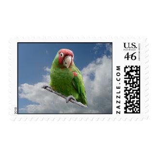 Red masked parakeet stamps