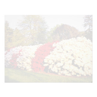 Red Mass of azalea bushes beautifies grounds flowe Letterhead