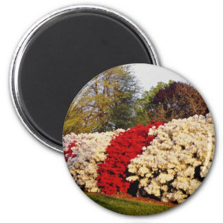 Red Mass of azalea bushes beautifies grounds flowe 2 Inch Round Magnet