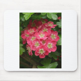 Red May Mouse Pad