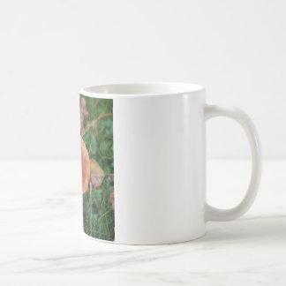 Red milk-cap lactarius coffee mug
