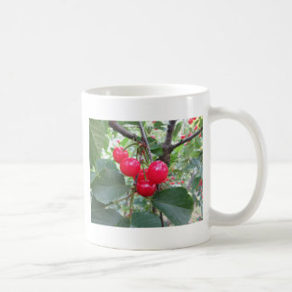 Red Montmorency cherries on tree in cherry orchard Coffee Mug