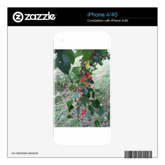 Red Montmorency cherries on tree in cherry orchard iPhone 4 Decal