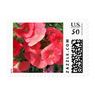 Red Morning Glory Flowers Postage Stamp