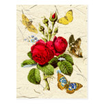 Red Moss Rose with colorful butterflies Postcard