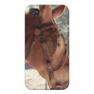Red Mule Cover iPhone 4/4S Cover