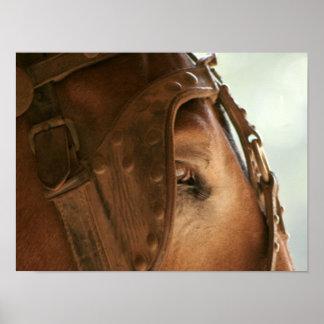 Red Mule - Eye Poster