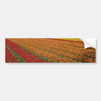Red Multicolored strips of tulips, Netherlands flo Car Bumper Sticker