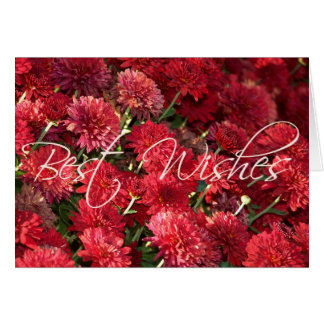 Red Mums - Best Wishes Card