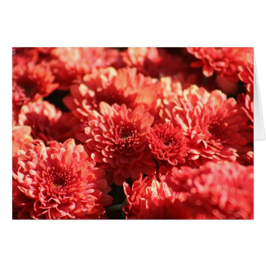 Red Mums in Public Garden Card