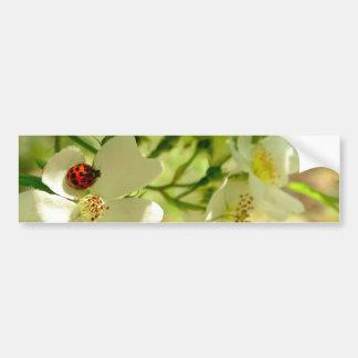 Red N Black Ladybug on a white blackberry flower Bumper Sticker