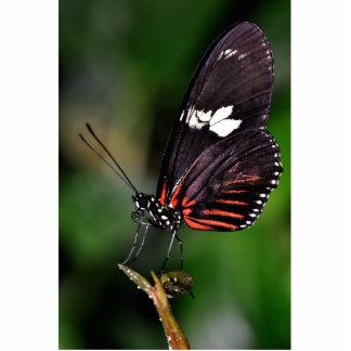 Red n Black Longwings Photo Sculptures