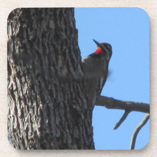 Red-naped Sapsucker Coasters