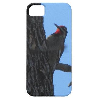 Red-naped Sapsucker iPhone 5 Case
