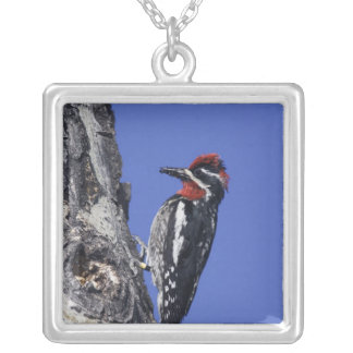 Red-naped Sapsucker, Sphyrapicus nuchalis, adult Silver Plated Necklace