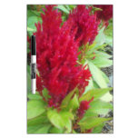Red Nature Dry Erase Board