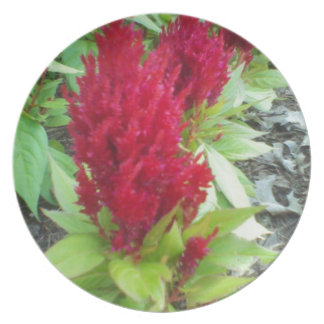 Red Nature Melamine Plate