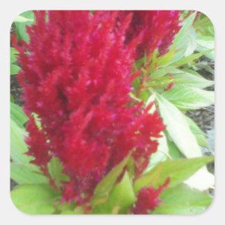 Red Nature Square Sticker