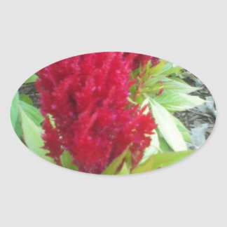 Red Nature Oval Sticker