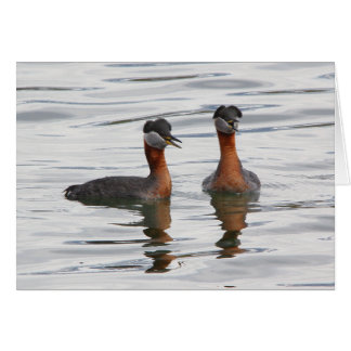 Red-necked Grebe III Greeting Cards