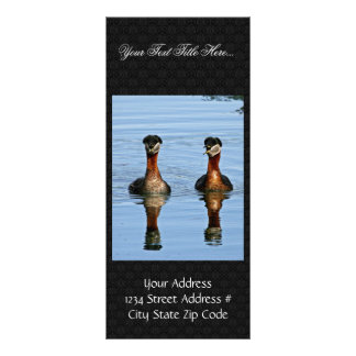 Red-necked Grebe Pair Rack Card