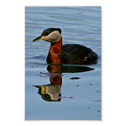 Red-necked Grebe Print