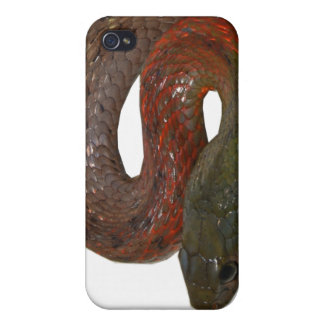 Red-Necked Keelback Case For iPhone 4