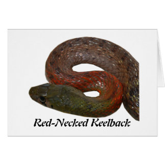 Red-Necked Keelback Greeting Card