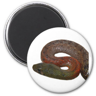 Red-Necked Keelback Magnet