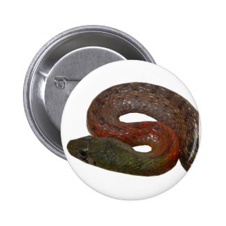 Red-Necked Keelback Pinback Button