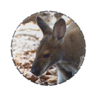 Red-necked Wallaby Jelly Belly Tin
