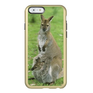 Red-necked Wallaby, Macropus rufogriseus), Incipio Feather® Shine iPhone 6 Case